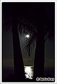 La Palma Princess, Moon Through The Palms, 18th September 2013